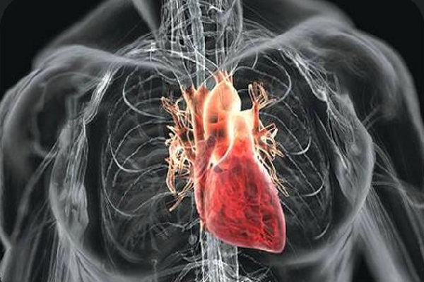 Russian Scientists will Create Artificial Heart