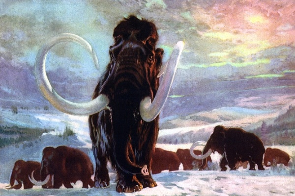 Russian Geneticists are planning to Clone a Mammoth