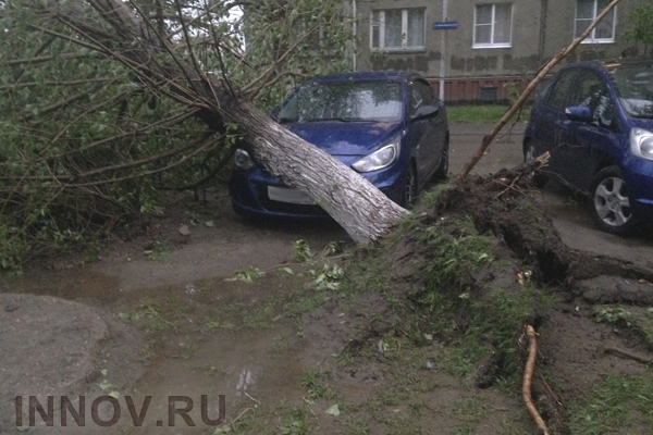 Storm in Nizhny Novgorod: Trees Uprooted