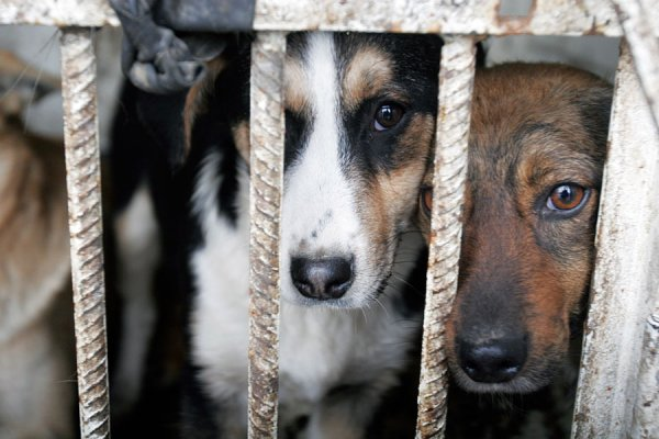 Fines for Cruelty to Animals will be Twice Higher