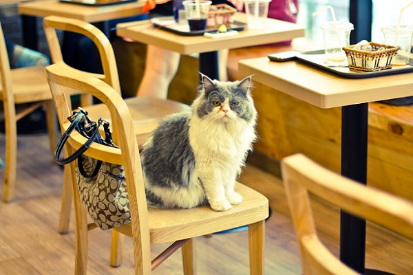 Café for Cats Opened in Russian Capitol