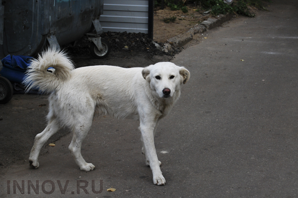 There are more than 7 000 Homeless Dogs in Nizhny Novgorod, Russia
