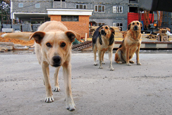 Dog hunters poisoned Animals all over Russia